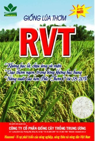 Túi Giống Lúa Thơm RVT