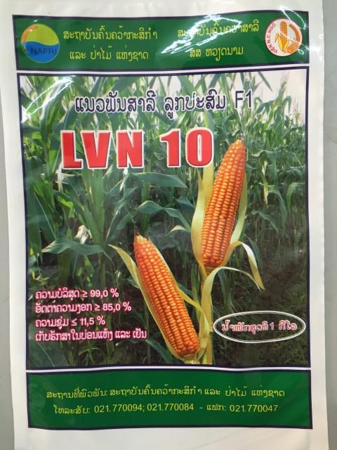Túi Giống Ngô LNV10