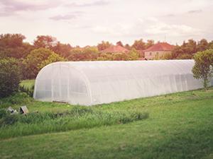 Ứng dụng quen thuộc nhất trong nông nghiệp - Nhà kính